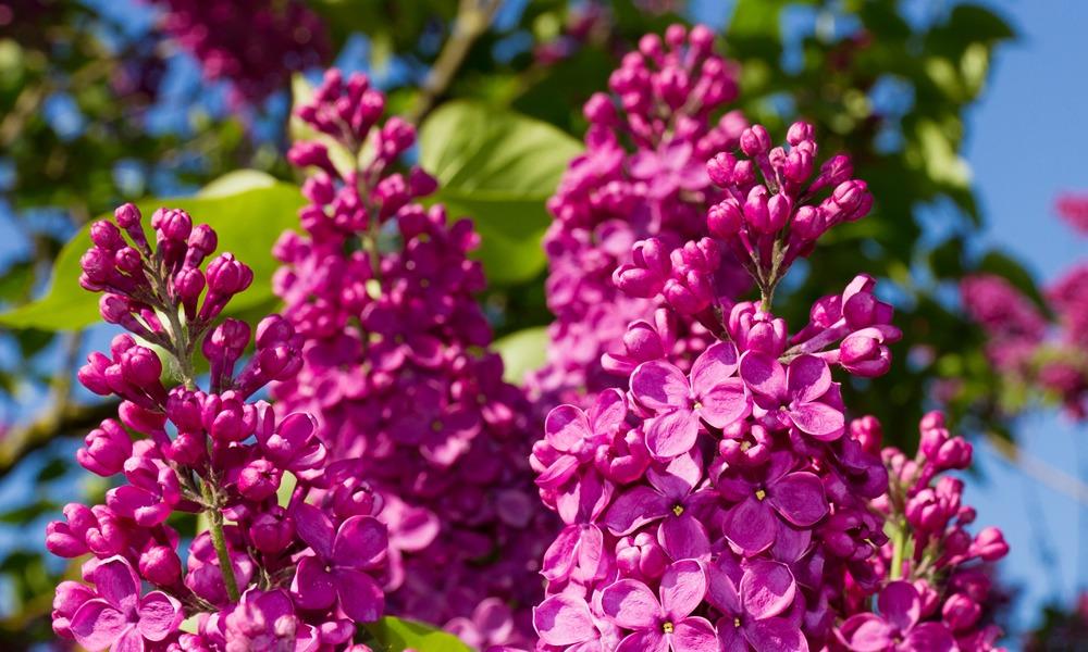 Bahar Çiçekleri ; Ruhunuzu Isıtan Bir Güzellik